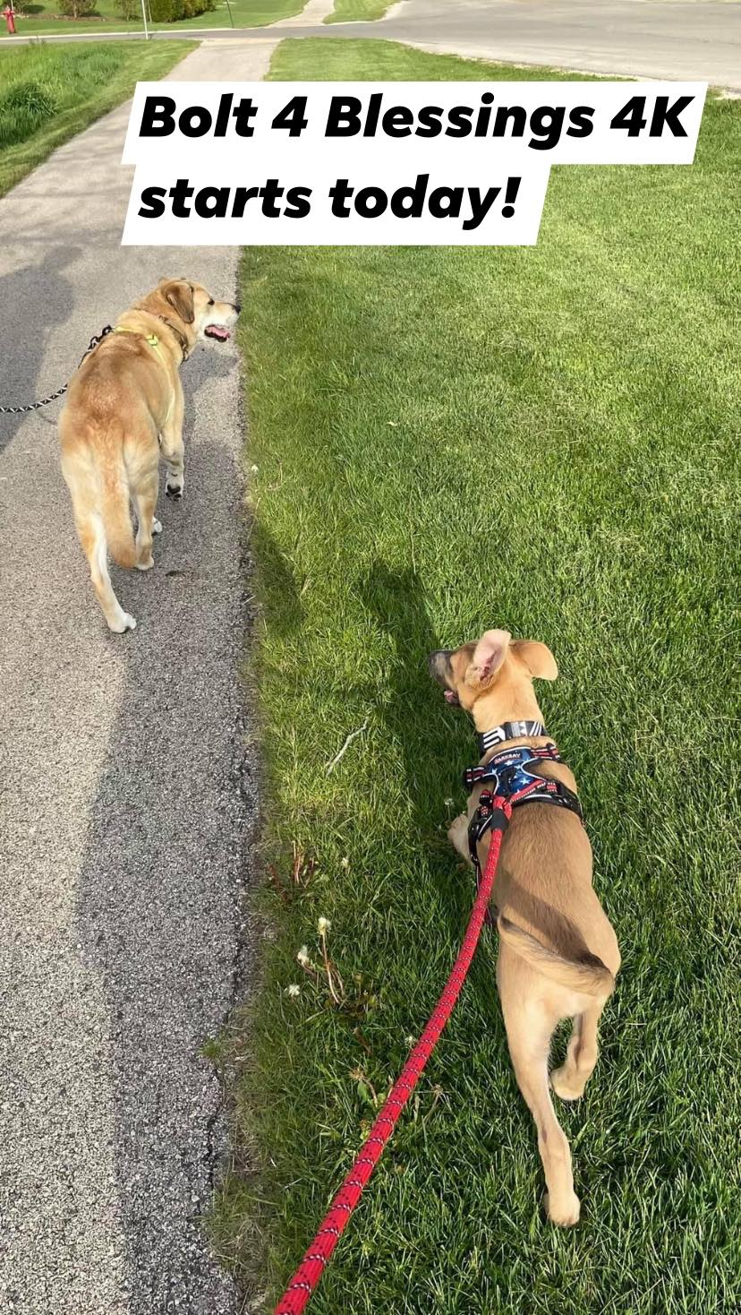 Dogs participating in Bolt 4 Blessings
